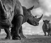 For Nikon Premium Members - Stand Out From the Usual - Wildlife Photography