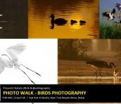 Season Ending Birds Photography Photo Walk