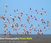 Bird Photography Photo-Walk Al Qudra