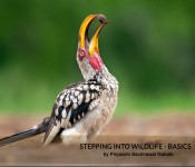 STEPPING INTO WILDLIFE - BASICS