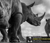 Stand Out From the Usual - Wildlife Photography